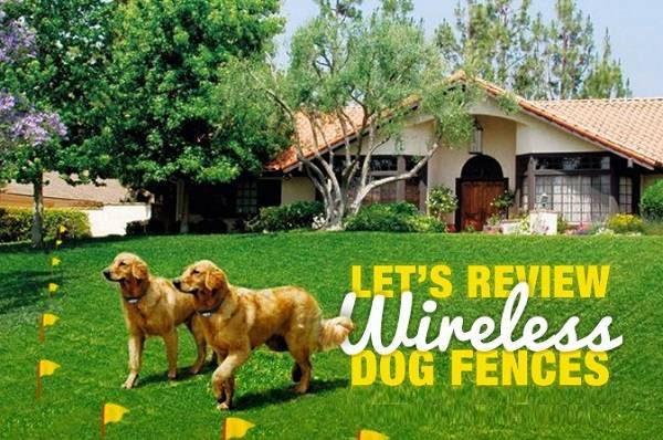 5 Best Wireless Dog Fence Reviews Doublebestreview